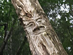 photo-Green Man face carved into tree